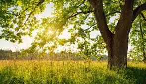 Naciones Unidas identifica 6 conexiones entre la naturaleza y el COVID